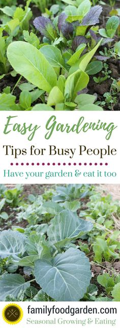 Have your Garden & Eat it too! Many of us are busy these days, yet we also still wish to garden & have fresh healthy produce. Is it possible to have both? When you're busy it helps to make your garden as maintenance free as possible. It also helps to choose crops that don't need...