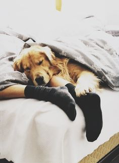 lazy, cuddly mornings with your best (4-legged) friend.