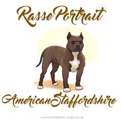 Der American Staffordshire Terrier ist eine von der FCI anerkannte Hunderasse aus den Vereinigten Staaten. Wikipedia Lebenserwartung: 10 bis 12 Jahre Herkunft: Vereinigte Staaten von Amerika Temperament: Hingebungsvoll, Loyal, Tapfer, Freundlich, Beharrlich, Aufmerksam Größe: Weibchen: 43–46 cm, Männlich: 46–48 cm Gewicht: Weibchen: 28–40 kg, Männlich: 28–40 kg Farben: Schwarz, Stromung, Rehfarbe, Blau, Braun, Sable