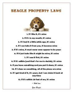 Beagle Property Laws