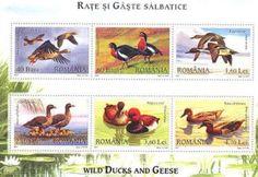 Filatelia: Anátidas (patos y ocas en los sellos rumanos)