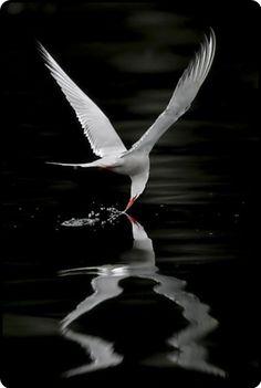 Couleur S'il Vous Plait ~Taking Flight