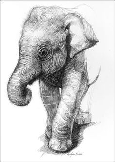 animal drawings easy pencil sketches realistic animals drawing cartoon tutorials fourpawsquare