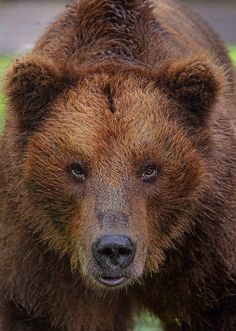 """Don't Mess With Me"" - #Grizzly"