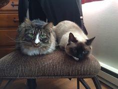 Lily & Bridget