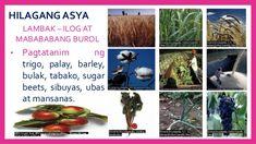 HILAGANG ASYA • Sa pag-aalaga at pagpaparami ng mga hayop tulad ng baka at tupa, nagkakaroon ang mga tao ng lana, karne at...