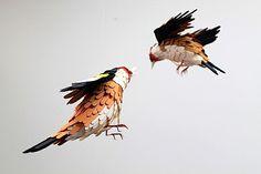 bird-4
