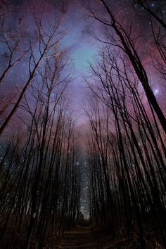 live photo iphone wallpaper Wither Trees Towards Shiny Starry Sky Mobile Wallpaper, Night Sky Wallpaper, Iphone 6 Plus Wallpaper, Halloween Wallpaper Iphone, Nature Wallpaper, Wallpaper Backgrounds, Phone Backgrounds, Galaxy Wallpaper, Black Wallpaper