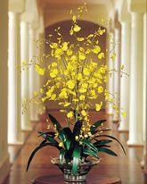 Large Silk Arrangements | Centerpieces | Silk Orchids