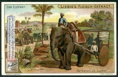 Indian Elephant Pulling Army Carts c1903 Card