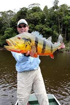 Image detail for -Amazon Peacock Bass Video – Barcelos 2010 - tomorrows adventures