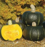 AAS 2005 Winner Squash 'Bonbon' bred by Johnny's Selected Seeds is a smooth skinned deep green buttercup squash weighing 4-5 pounds. | johnnyseeds.com