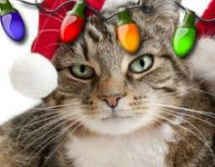 Christmas cat in lights! funholidaycats.com
