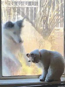 """Hey!…Hey!…Cat!…Cat!…"""