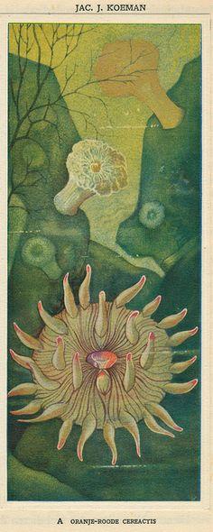 Zeewateraquarium en terrarium 1930