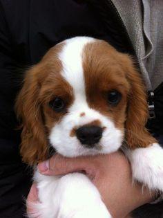 ~~Puppy~~
