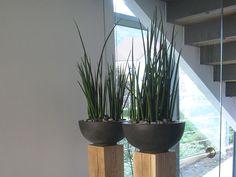 Nutzen Sie Pflanzen als Raumteiler.