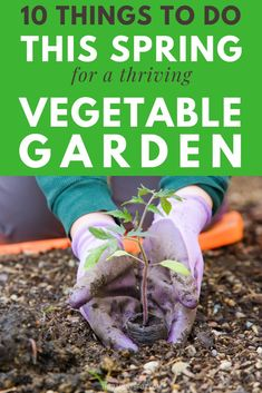 10 things to do this spring for a thriving vegetable garden. Looking for some DIY tips for planning a small home backyard garden? These tips will help! #garden #vegetables #spring Best Perennials For Shade, Spring Vegetable Garden, Sun And Water, Sustainable Food, Beautiful Flower Arrangements, Edible Garden, Plant Care, Garden Inspiration, Gardening Tips