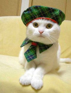 Tartan Tuesday: Animals in Plaid Part I Yorkies, I Love Cats, Crazy Cats, Tartan, Plaid, Cat Hat, Cat Costumes, Here Kitty Kitty, White Cats