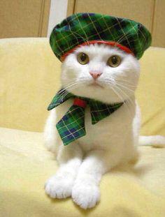 Tartan kitty!