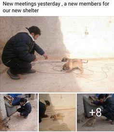 NYC Samson (@MeowMiya88)   Twitter Please follow&help wonderful #Cat Man of #Aleppo building a new sanctuary for #cats #dogs #kids @gattarodialeppo https://www.facebook.com/mohammadalaaaljaleel/ …