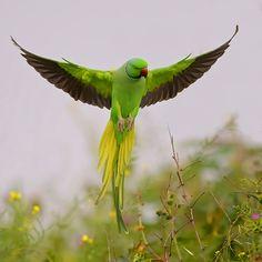 Verde esperança
