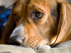 Does your dog know when you're sad? - TODAY Tech - TODAY.com