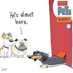 50 Best The Secret Life Of Pets Images Secret Life Of Pets Secret Life Pets