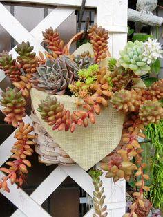 Great succulent hanging basket.