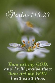 Thou art my God and I will praise thee (Psalm Psalms Quotes, Bible Verses Quotes, Bible Scriptures, Bible Notes, Scripture Verses, Showers Of Blessing, Psalm 118, Light Of The World, Godly Man