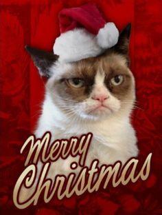 Grumpy Cat Christmas wallpaper http://www.mbawallpapers.com/wp-content/uploads/2015/12/grumpy-cat-christmas-wallpaper.jpg