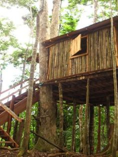 Bamboo Tree House at 3 Rivers Dominica Eco-Resort. $60/night. Double bed, hammocks. shower under treehouse.