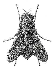 Insect drawings by Alex Konahin