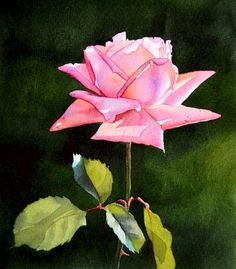Pink Rose ORIGINAL watercolor painting floral by Esperoart on Etsy