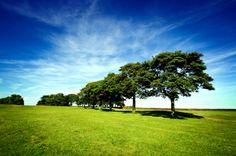 Plant A Few Trees | By: John R. Garnet September 15, 2010 | Reduce Your Carbon Footprint - Plant A Few Trees #GreenBlizzard