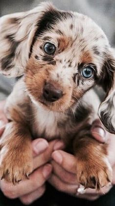 35 Funny Furry Animals To Brighten Your Day - LoveIn Home - 35 Funny Furry Animals To Brighten Your Day Funny animals, cute animals, baby animals - Super Cute Puppies, Baby Animals Super Cute, Cute Baby Dogs, Cute Little Puppies, Cute Little Animals, Cute Funny Animals, Adorable Puppies, Cute Animals Puppies, Funny Dogs
