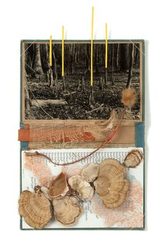 Book Series : Nina Garner  'Untitled'  2011 coffee stained silver gelatin print with paper, turkey tails, velum, thread, graphite, sycamore tree seed pod with a spider on book cover // sold