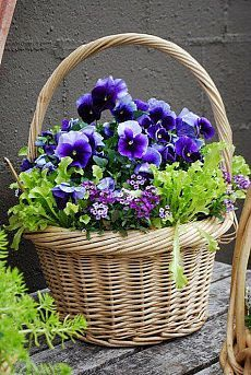Spring basket ~ container garden Pansies are my favorite Container Plants, Container Gardening, Gardening Zones, Flower Basket, Flower Pots, Flower Farm, Pot Jardin, Deco Floral, Art Floral