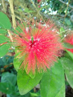 A beautiful flower we found in Cairns Botanical Gardens.