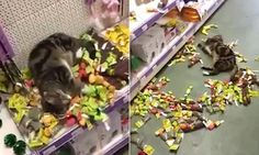 Video: Cat overdoses on catnip after breaking into a pet shop