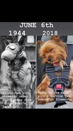 Funny Animal Pictures - 24 Pics - #funnymemes #funnypictures #humor #funnytexts #funnyquotes #funnyanimals #funny #lol #haha #memes #entertainment #vifunow.com