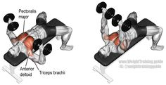 Dumbbell bench press. A compound push exercise. Target muscle: Pectoralis Major. Synergistic muscles: Anterior Deltoid and Triceps Brachii.
