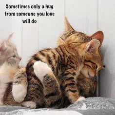 Too precious not to share...