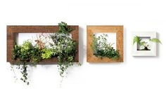 vertical garden: Nature on the wall