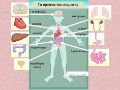 Δραστηριότητες, παιδαγωγικό και εποπτικό υλικό για το Νηπιαγωγείο: Τα όργανα του σώματος (2) - Πίνακας Αναφοράς