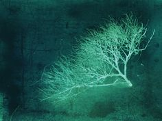 Robin Brown Photography #mood #texture #emerald