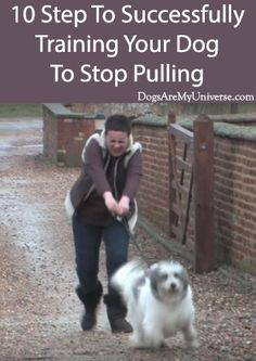 Stop your dog pulling. You can take your dog for a walk rather than the other way around. #StopDogPulling #DogExercise