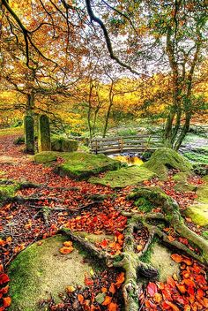 Derbyshire, England~ Autumn is just such a wonderful season, don't you agree?