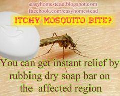 Itchy mosquito bite