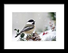 Winter Chickadee Framed Print By Christina Rollo